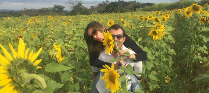 11 motivos para passear em Holambra, cidade das flores